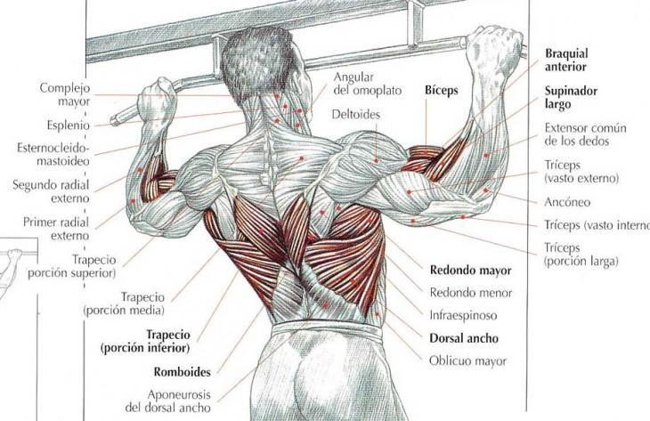 musculos dominadas