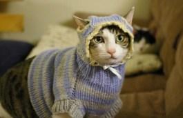 onde-comprar-roupa-frio-gato-1