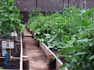 超重曹,花,野菜,育つ
