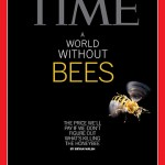 Time cover Beeless World