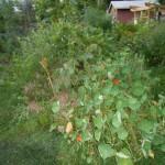 Hugel Garden 1