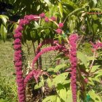 fruit tree guild