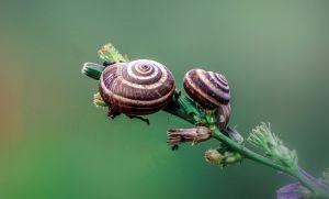 Spiral garden sprang from design like these garden snails