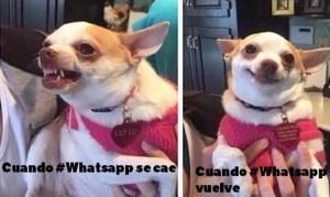 memes de la caida del Watsapp