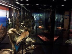El Museo Nacional de Historia Natural.