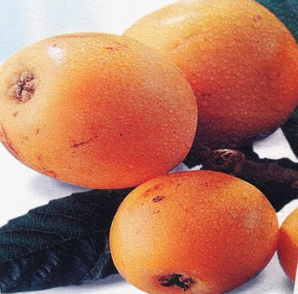 níspero árbol frutal