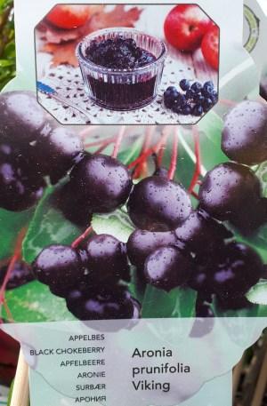 planta aronia frutos