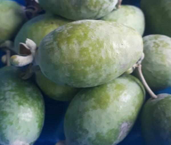 feijoa fruta guayabo del brasil