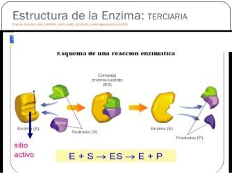 enzimas-para-primeros-medios-17-638