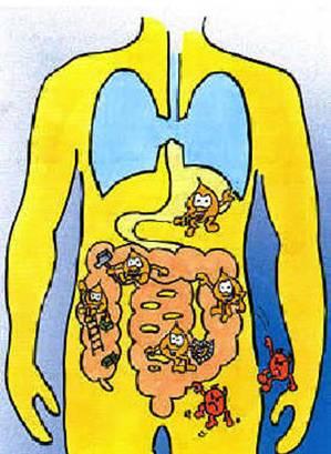 flora-intestino