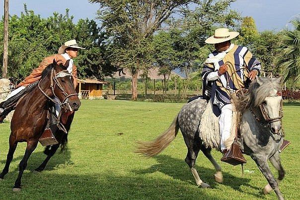 caballo peruano de paso fino