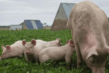 15 ideas de negocio para la ganadería a pequeña escala