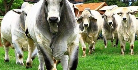 compra toros