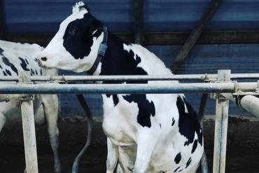 Estrategias en tiempos de sequía en la ganadería