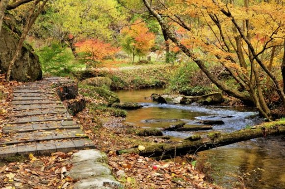 momiji colores hojas japon clima noviembre