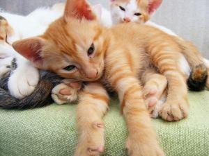 gatos juntos