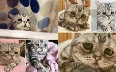 gatito triste