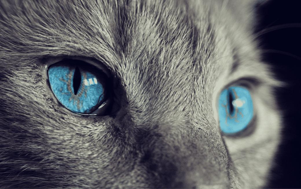 Por qué a mi gato le llora un ojo