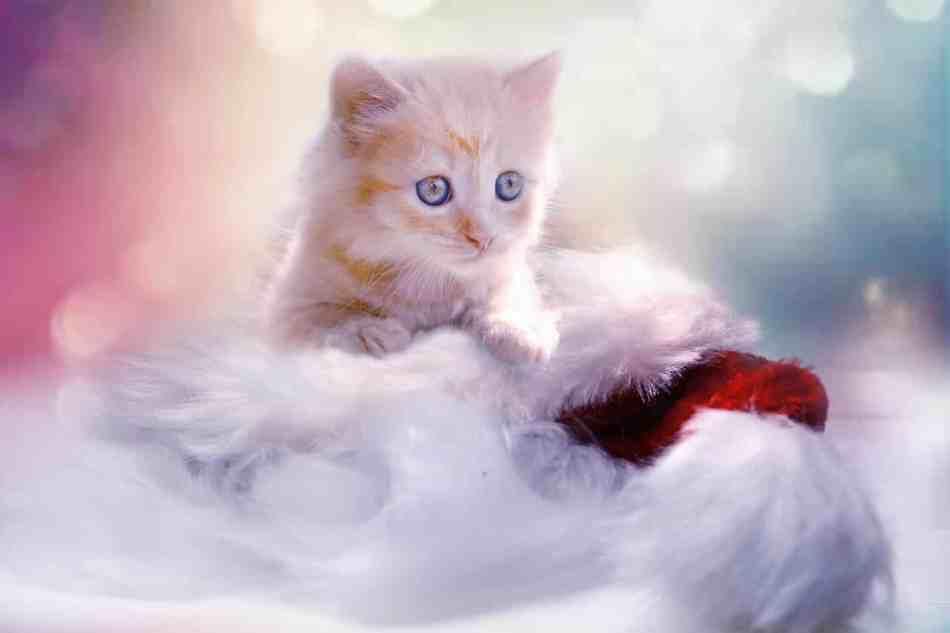 Por qué los gatos tienen 7 vidas