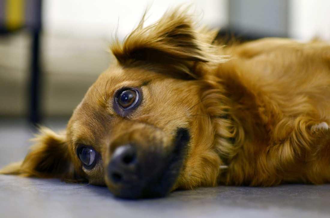mi perro esta deprimido