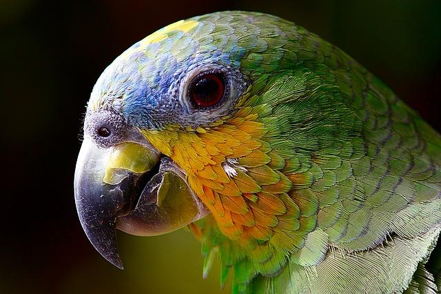Las aves son muy sociables.