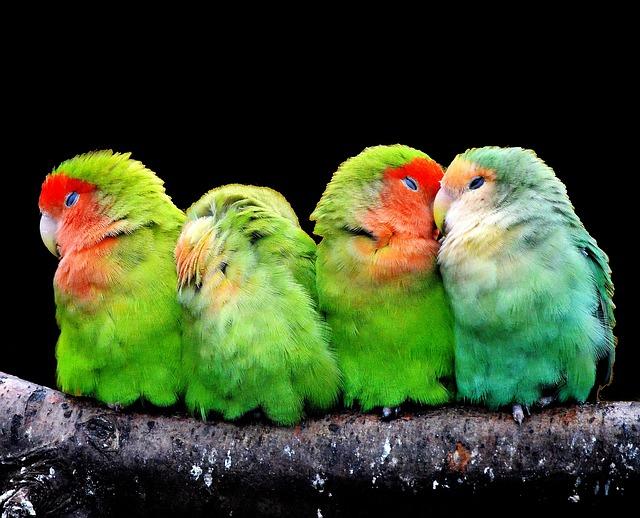 Todo sobre Aves domesticas características, tipos, cuidados, curiosidades