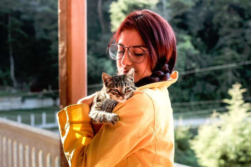 Alergia a los gatos, causas, síntomas y tratamientos