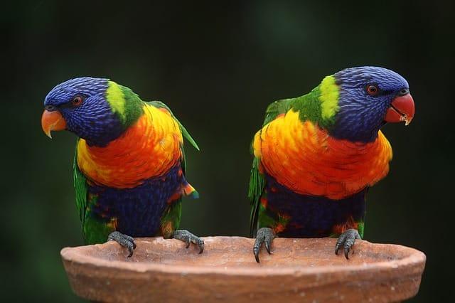 Las aves son atractivas e interesantes de tener alrededor.