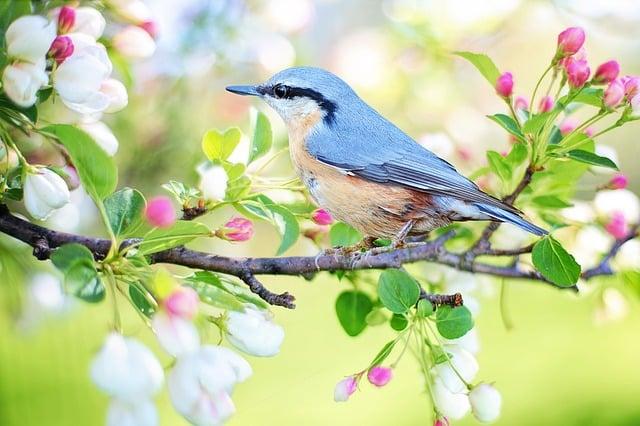Cuidados de las aves dómesticas