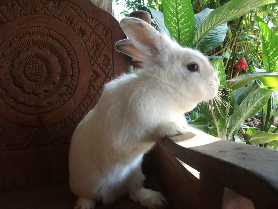 Bonitos nombres para conejos