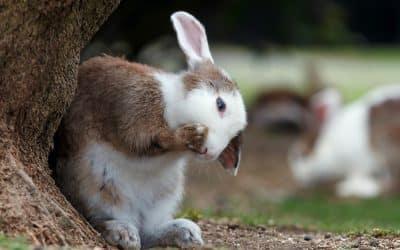 Mi conejo estornuda