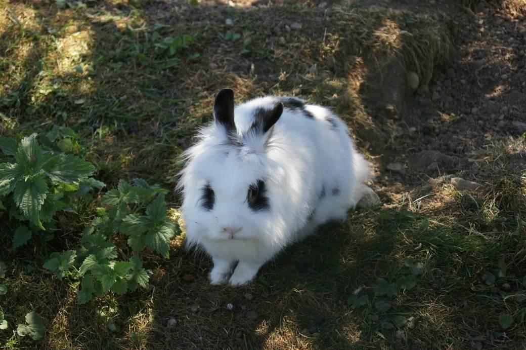 Nombre para conejos únicos