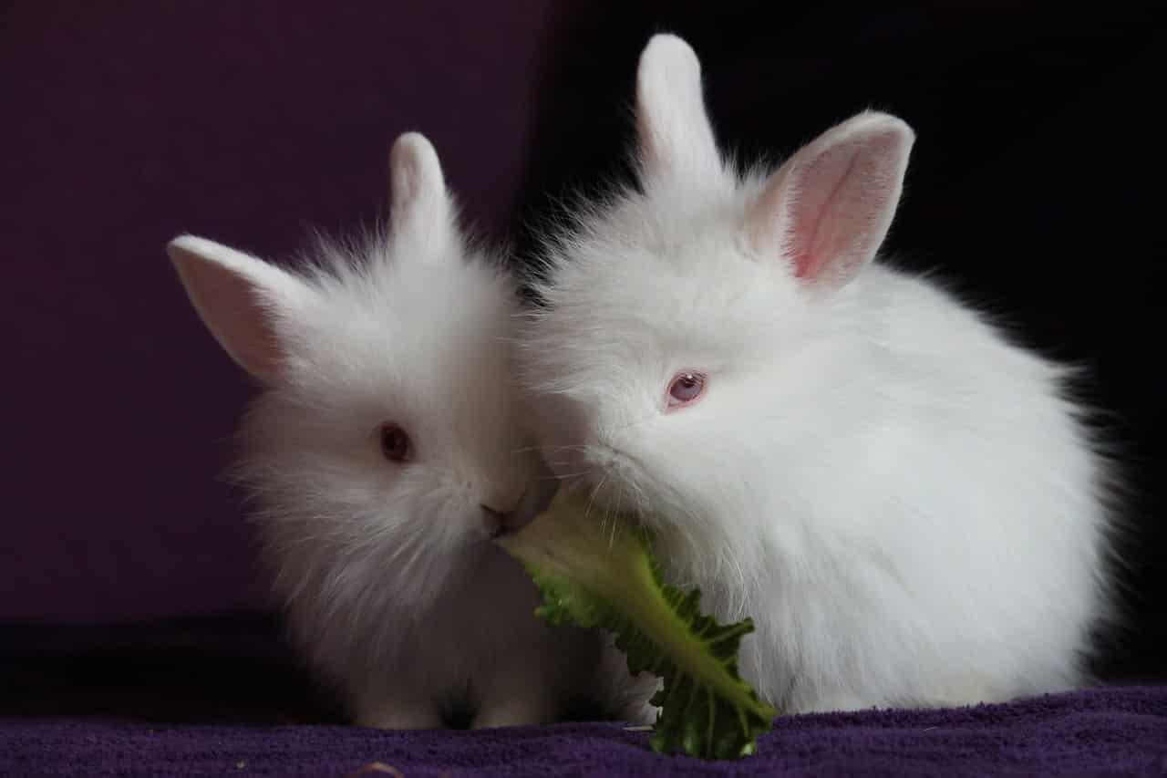Nombres para conejos blancos