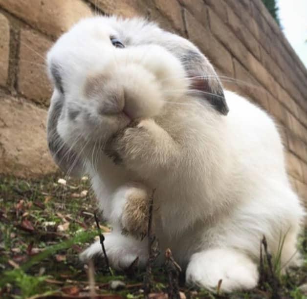 Porqué los conejos babean