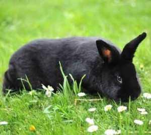 Conejo Alaska