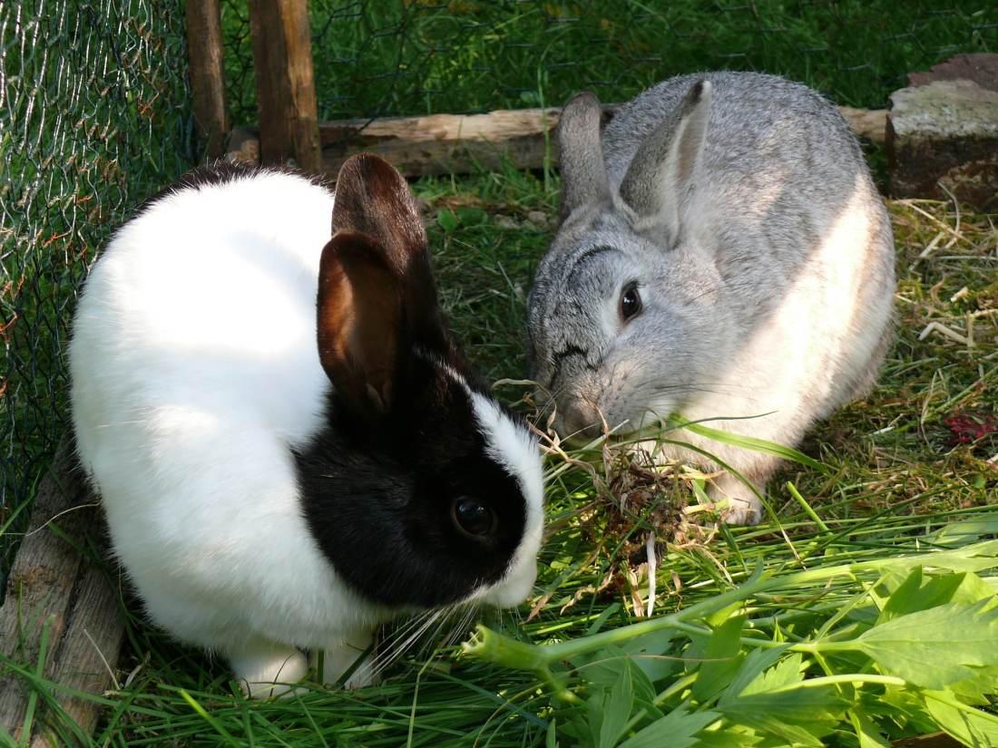 los sentidos de los conejos