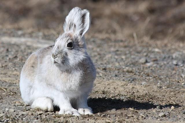 con que shampoo puedo bañar a mi conejo