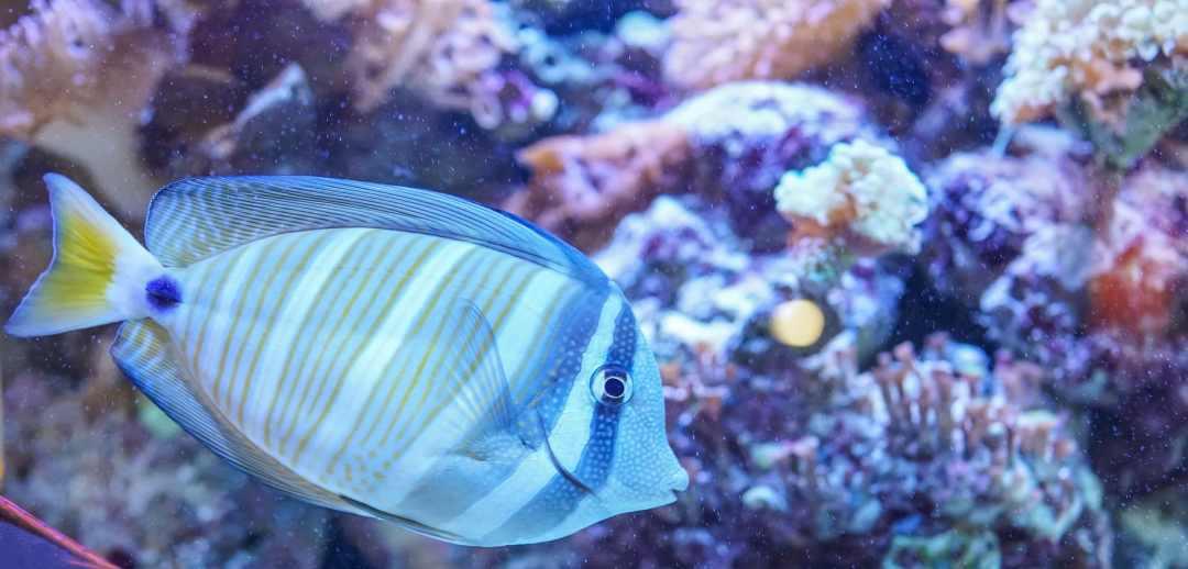 los peces orinan