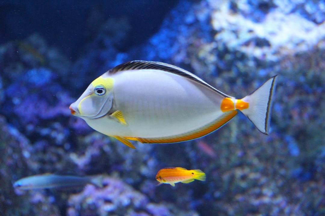 mi pez no quiere comer