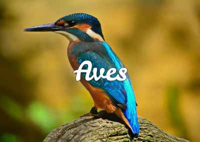 Todo sobre aves
