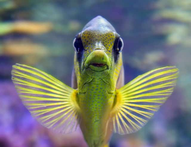 ¿Qué comen los peces?