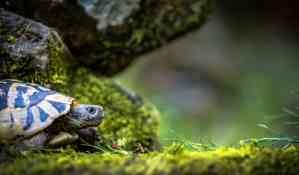 las tortugas son sordas