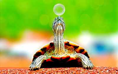 qué comen las tortugas bebé
