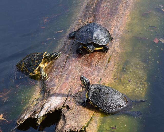 Cuidados de una tortuga