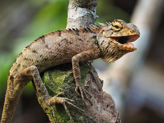 Características de las iguanas