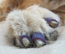 Traction Socks Nail Grips Or Boots For Slipping Dogs