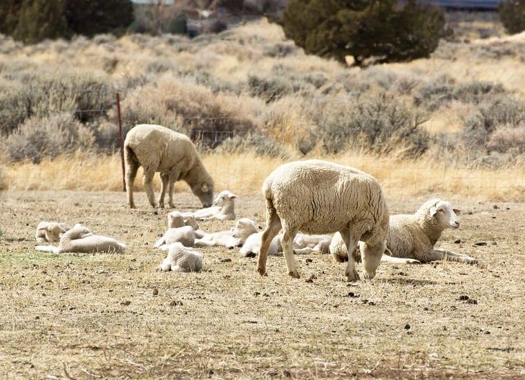 flock - need sound doctrine