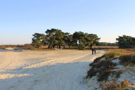 boscamping_langeloerduinen_drenthe15
