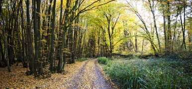grand-shadow-woods_woodland-track-in-autumn_cs_gallery_preview