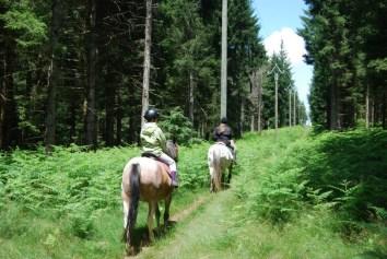 7289-paardrijden in de buurt van Camping Domaine Le Peyral